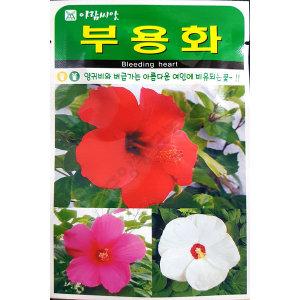 부용화/야생화/중앙종묘/꽃씨 부용화 100립