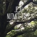 국내Q사 제주나무(비자나무) 프래그런스 오일 100ml