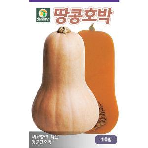 땅콩호박씨앗 10립
