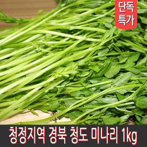 제철채소 경북 청도 미나리 1kg 세척 후 산지 발송