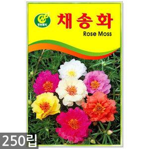 채송화 250립 - 채송화씨앗 채송화꽃씨 꽃씨 꽃씨앗