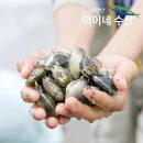 100% 국내산 남해안 왕 바지락 2K 특가판매
