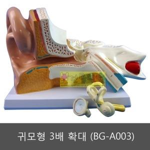 귀모형 3배 확대 (BG-A003)