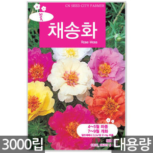 채송화 씨앗 3000립 / 채송화씨앗 채송화씨 꽃씨앗 꽃