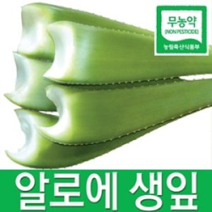알로에(올레).생잎/5kg에15000원/당일수확/당일배송