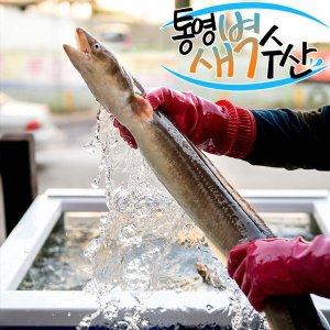 통영 손질 바다장어 1kg (특대) 비교불가 사이즈
