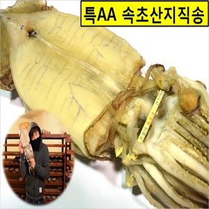 2019년 생산한 정말 맛있는 반건조오징어10미/왕특대