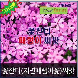 꽃잔디꽃/지면패랭이씨앗 (300알)/연중파종