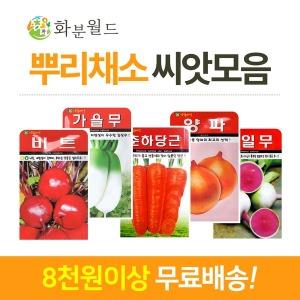 씨앗모음/꽃씨 채소(8천무배)공기정화식물 씨앗키우기