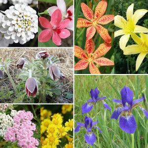 (다년생 야생화 꽃 씨앗)범부채/도라지꽃/붓꽃/꽃씨