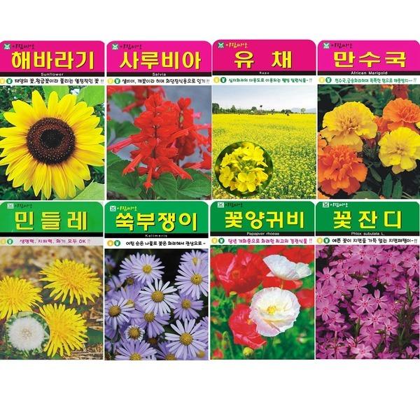 (8천무배) 꽃씨 특허씨앗 허브 야생화 씨앗 허브 새싹