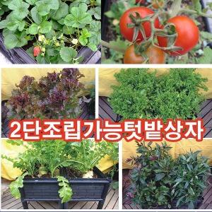베란다텃밭상자 화분 옥상 식물재배기 유지원 꽃 딸기