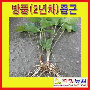 WC희망/방풍(2년차)종근(20개)/방풍모종/방풍종근/
