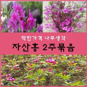 자산홍나무 자산홍 30센치 2주묶음
