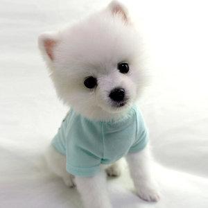 강아지옷 봄옷 아들 딸 티셔츠