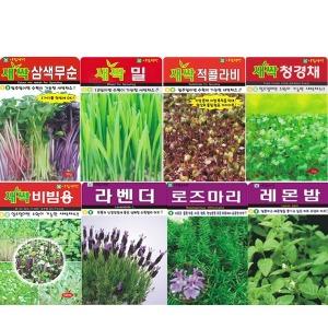 (8천무배) 새싹 씨앗 보리 밀싹  꽃씨 허브 야생화