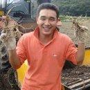 (봄햇삼세척700g) 홍삼다림전용 잔소난발삼 20뿌리내외
