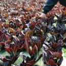 당일수확 충주 유기농 쌈채소 8종 1kg 샐러드채소