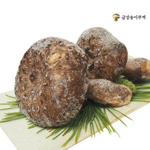 자연산 능이버섯 (특품) 냉동1kg / 건조100g (금강)