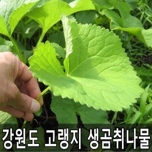 강원도 고랭지 생곰취나물 1kg 곰취농장 산지직송