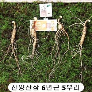 산삼 장뇌삼 산양산삼 뿌리 씨앗 먹는법 5뿌리 국내산