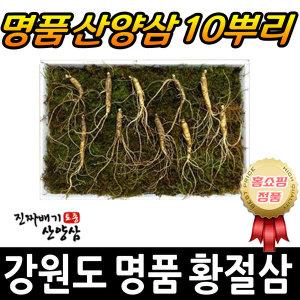 강원도 명품 황절삼 5년근 산양삼 장뇌삼 산삼 10뿌리