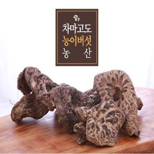 2019년 자연산 햇 능이버섯(차마고도농산)