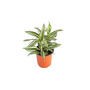 빅토리아 관엽 공기정화식물 미세먼지 그린테라피