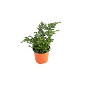 후마타 관엽 공기정화식물 미세먼지 그린테라피