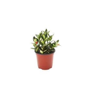 레마탄 관엽 공기정화식물 미세먼지 그린테라피