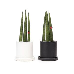 원형 3촉 스투키 화분 공기정화식물 화이트화분