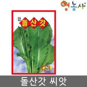 돌산갓씨앗/2000립 돌산갓 씨 갓 씨앗 채소 재배 종자