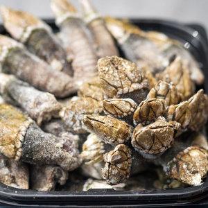 쫄깃쫄깃 국내산 거북손 1kg (40개 내외/사이즈랜덤)