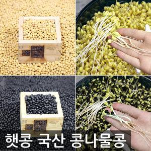 제주산 햇콩/발아율최고/소립종 풍산품종 콩나물콩1kg
