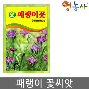 패랭이씨앗/ 패랭이씨 패랭이꽃씨앗  꽃씨 씨앗 종자