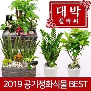 2019 공기정화식물 개업화분 집들이 인테리어 꽃배달