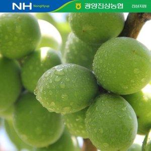 광양진상농협 청매실 10KG S(상) 실중량