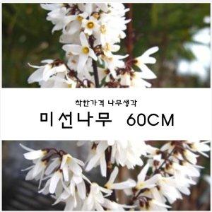 미선나무 미선나무 60cm 1주