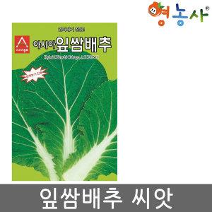 잎쌈배추씨앗/ 500립 쌈배추 쌈채소 잎 씨앗 채소씨앗
