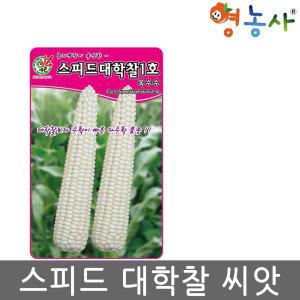 스피드 대학찰 옥수수씨앗/ 100립 옥수수 씨앗 종자