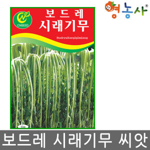 보드레 시래기무씨앗/ 15g 김장 시레기 무씨앗 씨앗
