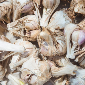 해남 햇마늘 小 50개(반접) 벌마늘 저장용마늘