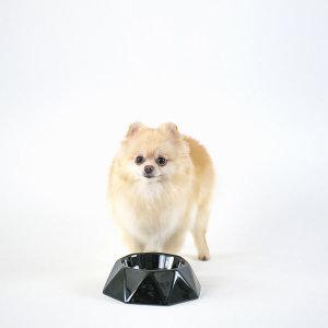 도자기 강아지 밥그릇 고양이 물그릇 졸리(블랙)