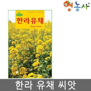 한라유채 씨앗/ 30g 유채씨앗 유채씨 유채꽃씨앗 월동