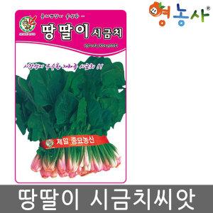 땅딸이시금치씨앗/ 35g 월동 시금치 씨앗 채소씨앗