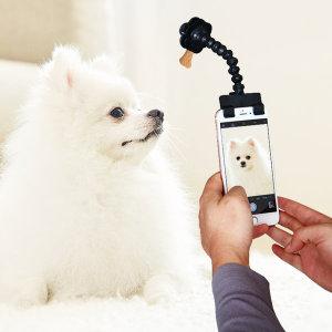 강아지 고양이 셀카봉 애견간식 셀카스틱 애견용품