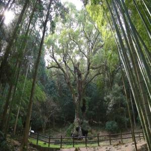 북큐슈 3일 큐슈올레맛보기+1300년 다케오온천+가라츠 소나무숲