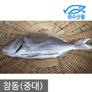 제수용참돔중대 반건조 참돔 도미 마른생선 중대34cm