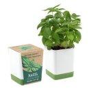 투톤사각화분_허브(바질) 식물키우기 허브화분 인테리