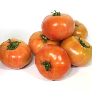 정품 찰 토마토 5kg 4-5번과